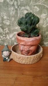 cactus old man